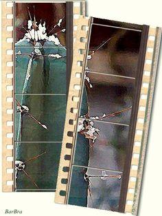 Spine di cactus con la neve, attraverso un vetro - FOTO-ARTE-FATTE - http://ilmioblogdiprova.over-blog.it/article-spine-di-cactus-99191034.html