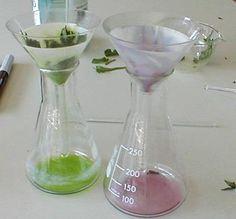 Indicatori naturali di pH