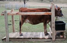 Antique Cattle Stanchions | New Stanchion - heaps of pics!