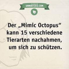Seht euch hier das Video des sich verwandelnden Oktopus an: http://www.unnuetzes.com/wissen/9602/mimic-octopus/