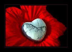 Perche per me sei Musica nell'anima:) Gb Bilder, Happy Dance, Hibiscus, I Love You, August 27, Advent, Music Videos, Youtube, Musica