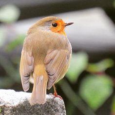 Bird, Animals, Animais, Animales, Animaux, Birds, Animal, Dieren, Birdwatching