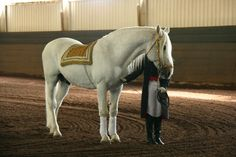 Lipizzaner Stallions 7 by mariusza, Favory Merlin Lipizzaner Hengste 7 von Mariusza, Favory Merlin Pretty Horses, Beautiful Horses, Lippizaner, Lipizzan, Spanish Riding School, Horse Dance, Merlin, Some Beautiful Images, Andalusian Horse