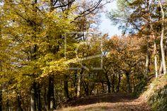 Durch den herbstlichen Wald - Wald, Bäume, Herbstwald, Herbst, Naturfotografie  http://ronni-shop.fineartprint.de