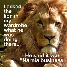 I asked the lion in my wardrobe what he was doing there …