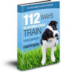 Dog training is a fun experience for your dog. They will learn how to interact with other dogs and learn the basic rules of obedience. Although sometimes expensive, as long as you are seeing constant improvements along the way, it would make sense to get some help from professionals who have spent a lifetime doing what they know best.