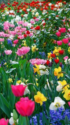 Beautiful spring <3