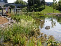 Graphisoft-Park-by-Garten-Studio-12-lakeside-plants « Landscape Architecture Works | Landezine