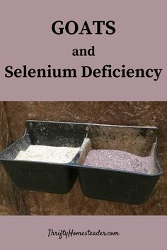 Selenium is a micronutrient needed by goats (and lots of other living creatures). Although they only need a little, a deficiency can cause big problems. When goats don't have enough selenium, does may have trouble getting pregnant, are more likely to have problems giving birth, are more likely to have a retained placenta, and probably won't produce as much milk as they otherwise would. #goatminerals #goats #raisinggoats Selenium Deficiency, Breeding Goats, Trouble Getting Pregnant, Nigerian Dwarf Goats, Raising Goats, Baby Goats, Livestock, Homestead, Birth