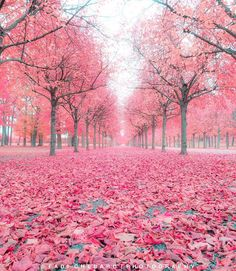 Find images and videos about pink, nature and photo on We Heart It - the app to get lost in what you love. Pink Trees, Colorful Trees, Beautiful Places, Beautiful Pictures, Beautiful Flowers, Wonderful Places, Pink Leaves, Blossom Trees, Nature Wallpaper