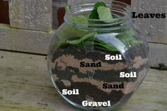 Easy instructions for a homemade wormery. All you need is an old jar, sand, gravel, soil, leaves and some worms! Super simple science for kids Science Activities For Kids, Easy Science, Preschool Science, Science Lessons, Teaching Science, Science Projects, Life Science, Science And Nature, Science Experiments