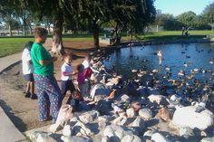 Feeding the Ducks at our Local Park