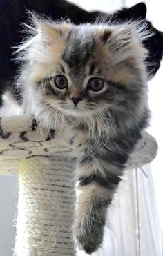 Honestly, not a cat person but it's sooo cute