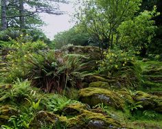 Robin Ayers Beautiful Ireland Photography    The grounds at Muckcross house are beautiful! Photographer's dream!