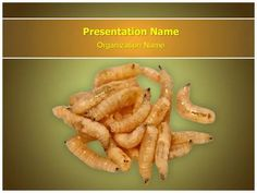 Larva Powerpoint Template is one of the best PowerPoint templates by EditableTemplates.com. #EditableTemplates #PowerPoint #Angling #Fishery #Change #Fresh #Crawling #Runner #Meal #Ground #Small #Transform #Animals And Pets #Fish-Meal #Tool #Biology #Lure #Pupa #Mixed #Hook #Nature #Ground Bait #Maggots #Metamorphose #Pile #Group #Bait #Sport #Worm #Reel #Insects #Grubs #Larvae #Disease #Bunch #Creepy #Soft #Animal