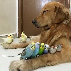 Dog, hamster and 8 birds is the most adorable friendship in the world