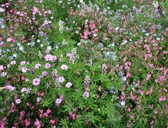 Bloemen zaden mengsels | De Bolster