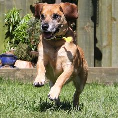 Sponsor dog Jake having fun in the sun at Dogs Trust Leeds! If you would like to sponsor a dog like Jake, click on his image.