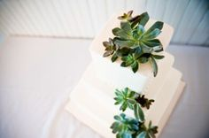 more succulent cake ideas! Floral and Event Decor – Austin, Texas