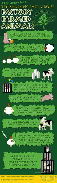 The truth about factory farmed animals. Eat sustainably. Go vegan!