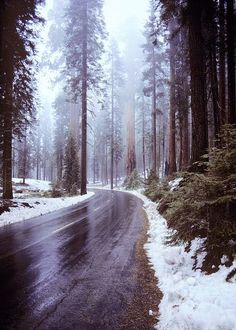 Winter Road.. CAsequoia11 by catnahat on Flickr..