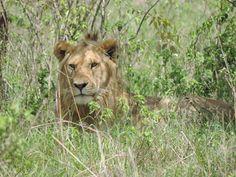 Kenya wildlife safaris , things to do in kenya .Kenya Adventure Safari Tours Tanzania Adventure Safaris