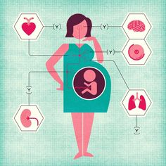 A Pregnancy Souvenir: Cells That Are Not Your Own - The New York Times