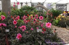 The National Dahlia Collection exhibit at the RHS Chelsea Flower Show received a Gold Medal for this beautiful, Mexican inspired display.