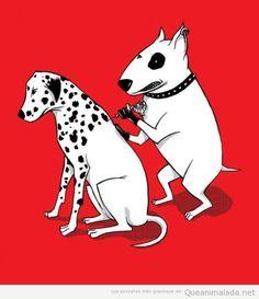Bull terrier vs. Dalmata     tatouage