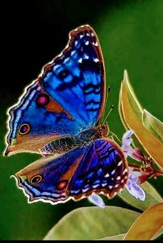 Different Types of Butterflies krafttier √ 6 Different Types of Butterflies Butterfly Kisses, Butterfly Flowers, Blue Butterfly, Butterfly Wings, Types Of Butterflies, Flying Flowers, Beautiful Bugs, Beautiful Butterflies, Beautiful Creatures