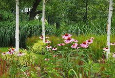 druga strona ogrodu