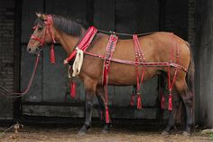(Сбор - Корсика) 2001 г.р. Vyatka horse, mare, with traditional Russian tack for driving