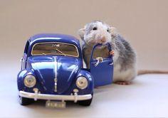rats <3 beepbeep