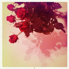 Red roses //