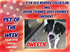 PET OF THE WEEK  Sweetie is a 2 year old female border collie/lab mix looking for her forever home!! She is house trained friendly and very obedient. She is available for adoption through Texas Star Rescue in Longview, Texas #TSRadopt #dog #helpsavealife #rescuedismyfavoritebreed #woof #adoptdontshop #DogsTale #texasstarrescue #rescue #adopt #puppies