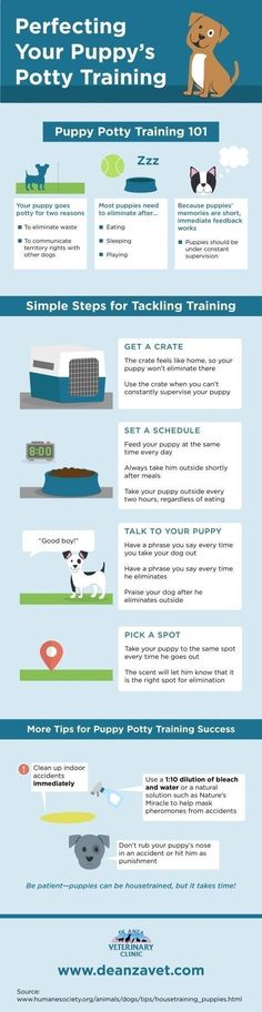 Pets Care - Pet Training - Do you know how to potty train your puppy? Start by setting a feeding schedule! Click over to this San Jose animal hospital infographic to get more tips that will help you potty train your furry friend.: This article help us to teach our dogs to bite just exactly the things that he needs to bite #puppypottytrainingschedule #puppytrainingbiting The way cats and dogs eat is related to their animal behavior and their different domestication process…