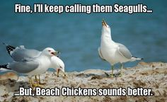 My friend megan calls them albino hawks to confuse her brother, and my friend tiffany calls them sea flap flaps