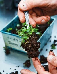 How to Grow Seedlings Indoors  Sow seeds now so they'll be ready to transplant once the warm weather is here to stay