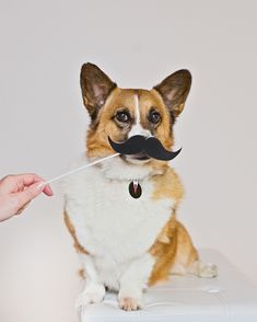 I mustache you a question: Does this tag make me look like I close deals or steal hearts? Pet Id Tags, Dog Tags, Mustache, Hearts, This Or That Questions, Dogs, Moustache, Pet Dogs, Doggies