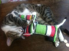 cats do like to play with dogs! (Duru Bey, said cat, is not for sale) Produce Bags, Plastic Bags, Market Bag, Shopping Bag, Play, Cats, Animals, Plastic Carrier Bags, Gatos