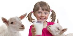 10 Reasons Why Goat Milk is Good For Health