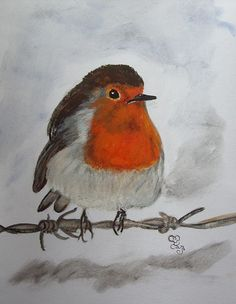 Robin on the wire watercolour