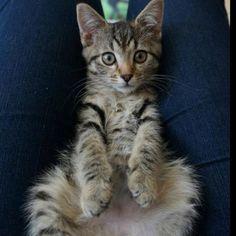 My favourite fluffy kitty!