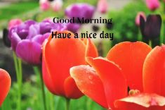 A collection of Beautiful Good Morning Images, beautiful good morning pictures, whatsapp good morning images and quotes. Sweet Good Morning Images, Morning Images In Hindi, Good Morning Picture, Morning Pictures, Friends Image, Happy Birthday Images, Cool Baby Stuff, Picture Quotes, Funny Quotes