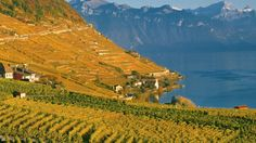 Places To Travel, Places To Go, First World, Switzerland, Places Ive Been, Vineyard, Mountains, Country, Day