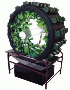 hydroponics-system. ! fresh salad per day