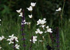 Hugh Tanton Garden Design - Garden Design, Planting and Landscaping - Surrey, Sussex and Hampshire