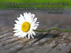 Gedichte und Liedtexte von Önder Demir: Du bist immer schön