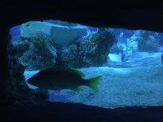 Arcade, Port Elizabeth, Aquarium, Spain, Fish, Pets, Animals, Santiago De Compostela, Goldfish Bowl