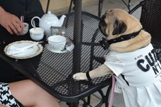 Afternoon Tea in La Jolla, CA with Miss Chloe Bisou...